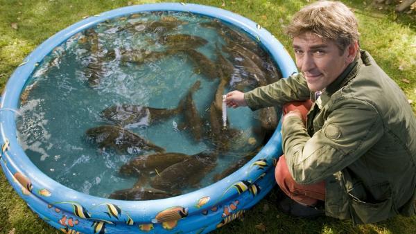 Kika fische der karpfenr uber for Was brauchen fische im teich