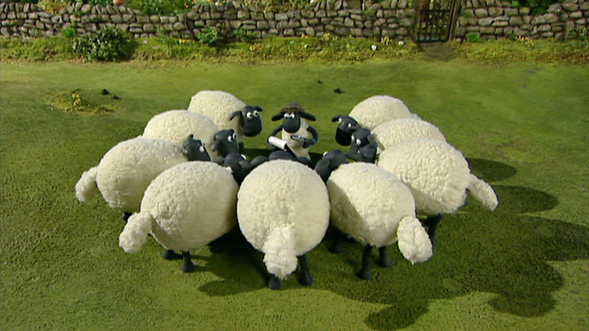 Bildergebnis für Bilder von Schafen